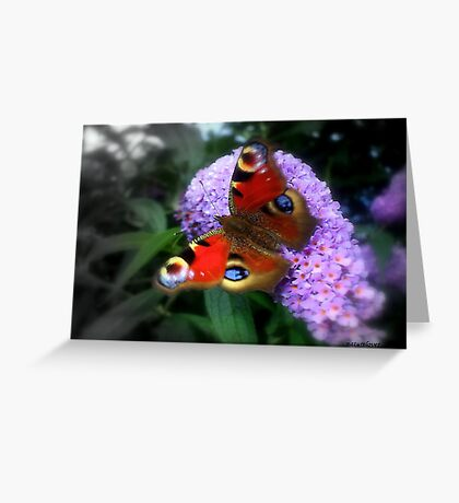 Butterfly Cushion Greeting Card