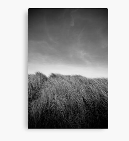 Grass in Bull Island Canvas Print