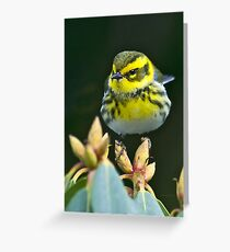Townsend's Warbler in Winter Greeting Card
