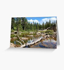 Forest Lake - Two Greeting Card