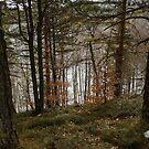 Woods by Milos Markovic