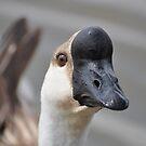 Goose by Savannah Gibbs