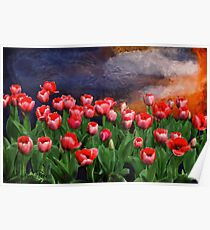 Special order Sunset for my tulip garden Poster