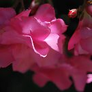 Oleander Hope by Lozzar Flowers & Art