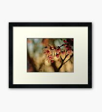 Blossoms & Light Framed Print