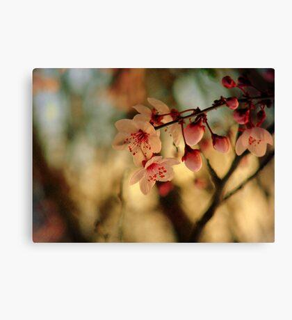 Blossoms & Light Canvas Print