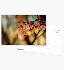 Blossoms & Light Postcards