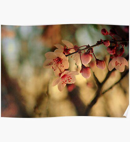 Blossoms & Light Poster