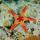 Sea Star by Andrew Trevor-Jones