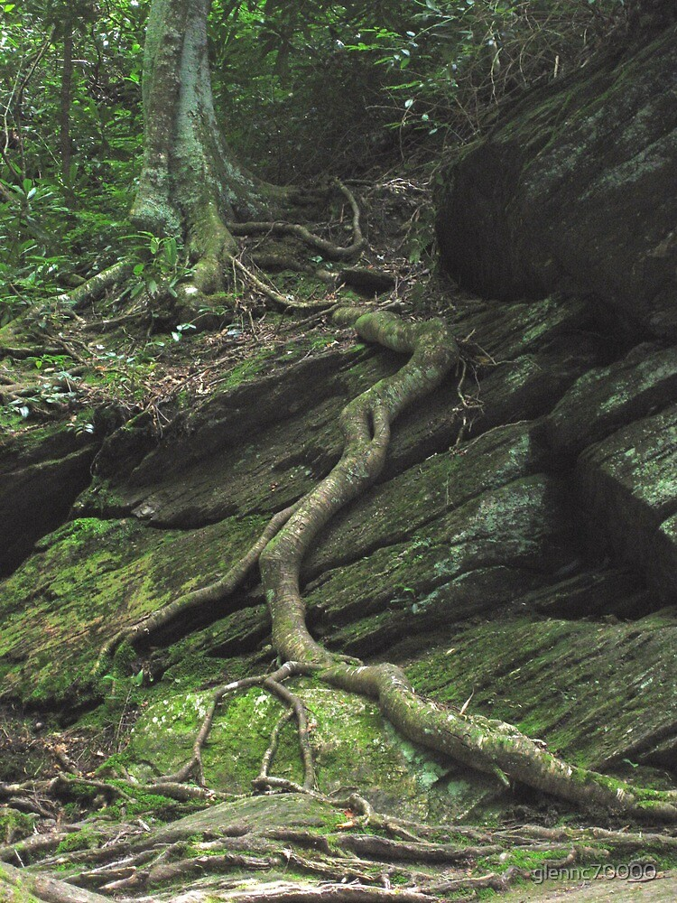 Gnarled Tree Roots - Smoky Mountains by glennc70000