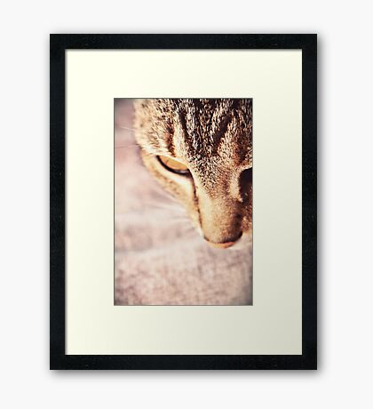 Oh little Tabetha, you are a nosy kitty.  Framed Print
