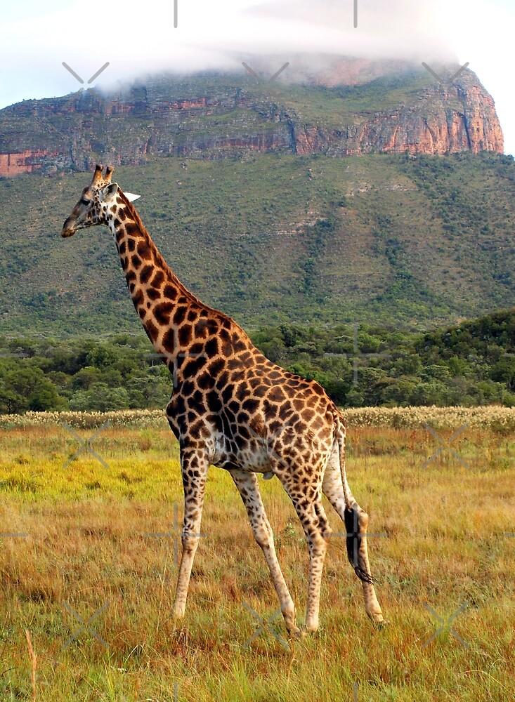 Giraffe, Entabeni Lodge, South Africa by Ludwig Wagner