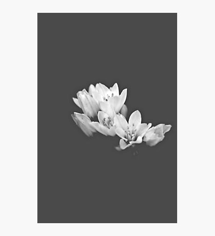 Blossom in the Dark Photographic Print