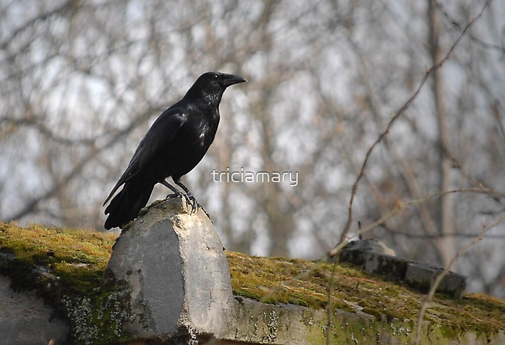 Blackbird, bye, bye by triciamary