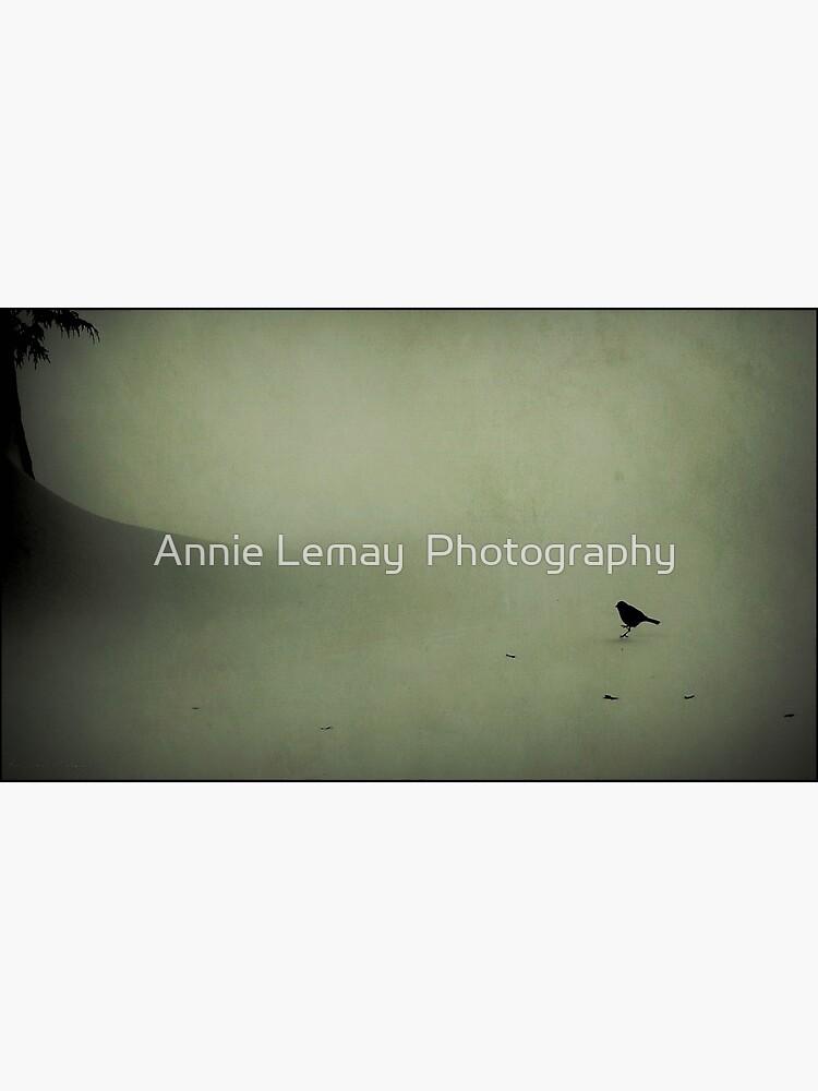 Snow Bird by ajlphotography