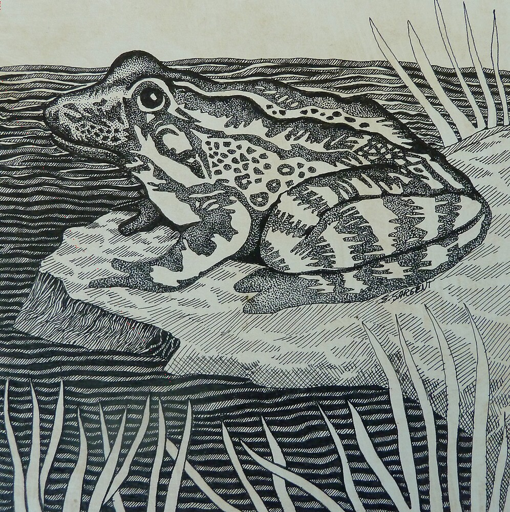 The Frog by Sally Sargent
