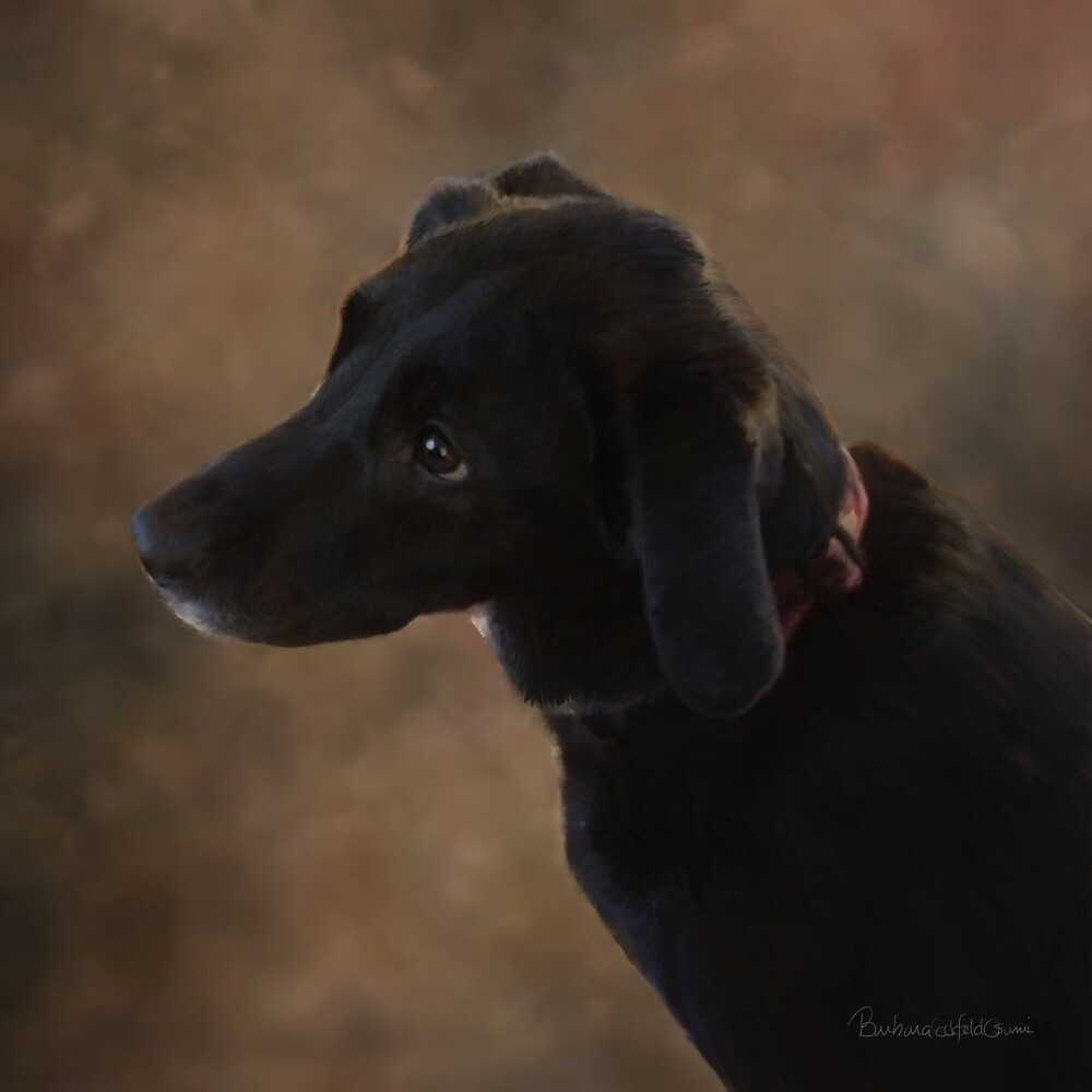 Reilly the Black Lab by DolphinPod