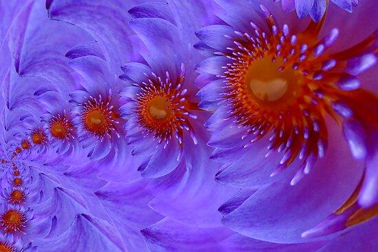 lotus infinite love by hourevolution