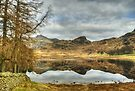 The March Tarn by Jamie  Green