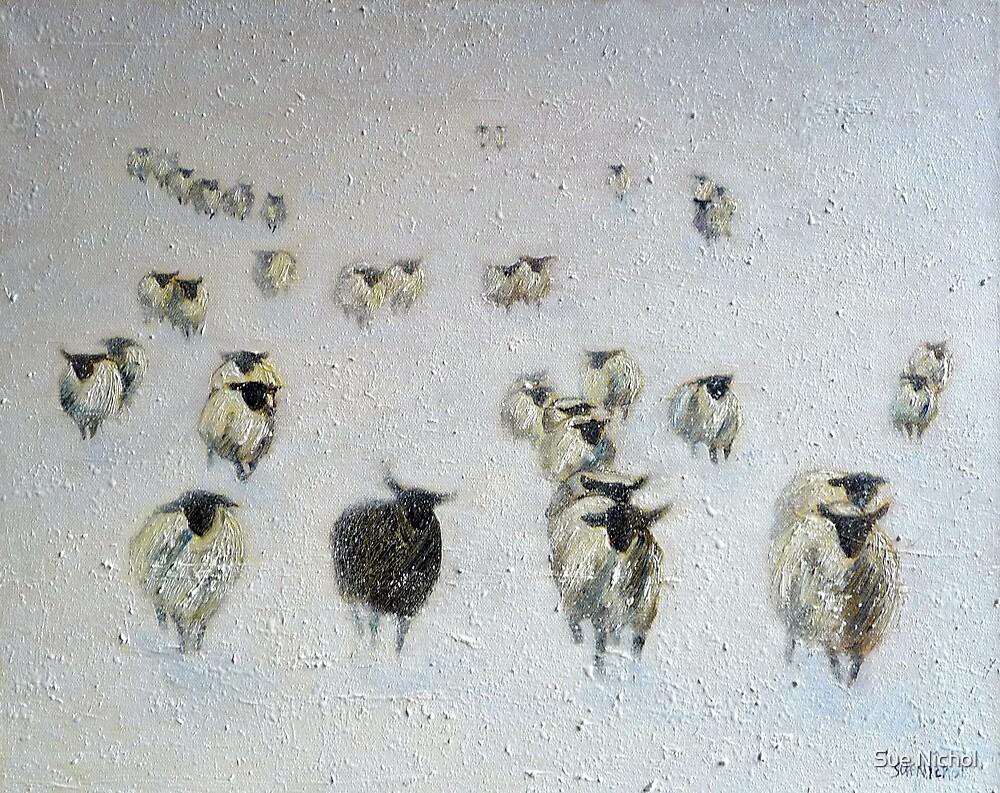 Odd One Out by Sue Nichol