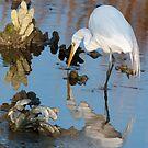 Great White Egret at Dusk by J Jennelle