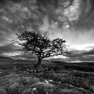 The Wiley Windy Moors by Jeanie