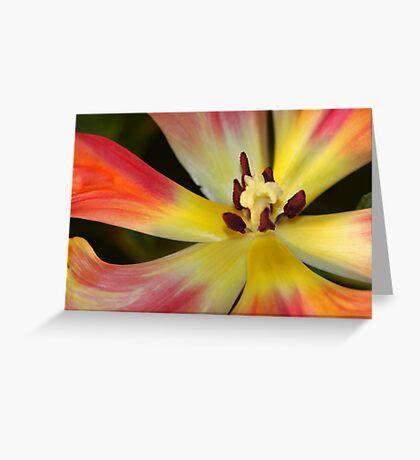 Rainbow Petals Greeting Card