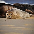 Seal by Jozianna