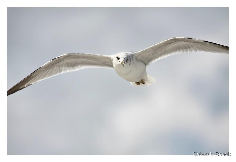 Soft Seagull Soar by Deborah  Benoit