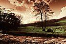 Harthope Burn, Northumberland National Park. UK by David Lewins