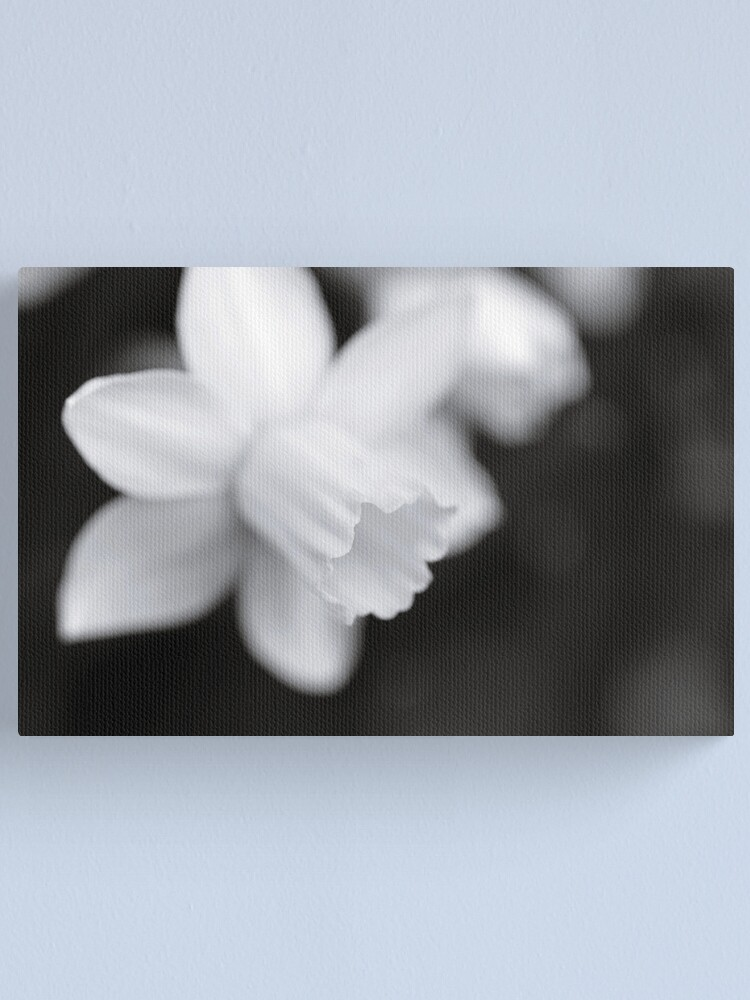 Alternate view of Softly Canvas Print