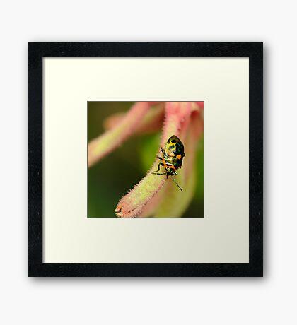 It's a bug's life Framed Print