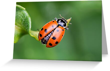 Ladybug, Ladybug Fly Away Home by Tracy Riddell