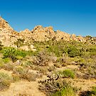 Joshua Tree Panoramic by Flux Photography