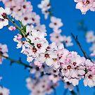 flores de almendro by ser-y-star