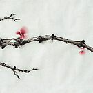 Winter plum flowers by Wieslaw Borkowski Jr.