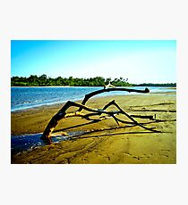 Sand Tree, Flying Fish Point, Nth Queensland Photographic Print