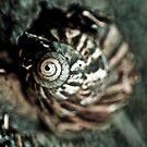 He walked, I shot by a camera c..l..i..c..k!On Explore Featured Work 17 Sep 2011 by Kornrawiee