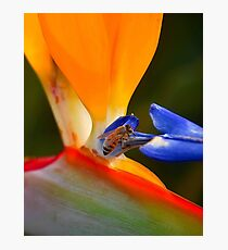 Nectar Photographic Print