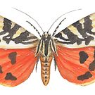 Jersey Tiger Moth by Theodora Gould