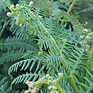 Close-up of fern detail in English woodland, curly fronds and green leaves by SJMcDermott