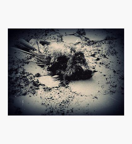 Lost ~ Buckston Browne Farm Photographic Print