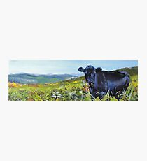 A Lunch Interrupted - Painting of a Dexter Cow Photographic Print
