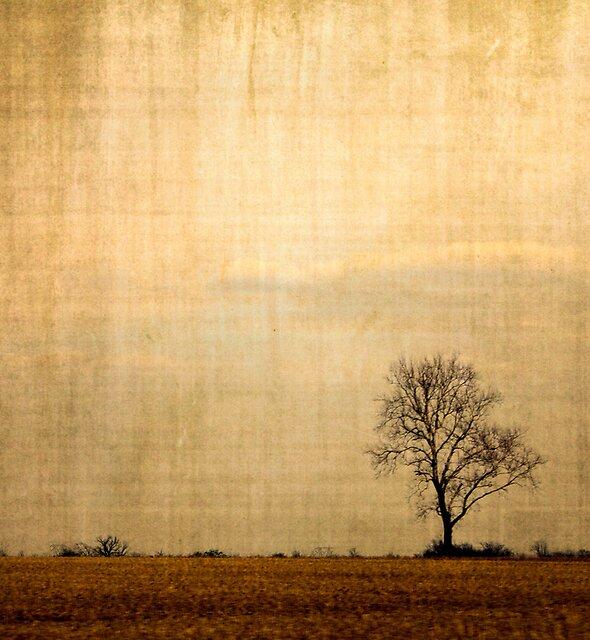 Lone Tree by Joy  Rector