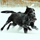 Racing in the snow by Alan Mattison