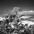Mist and Ice (mono) by Jeanie