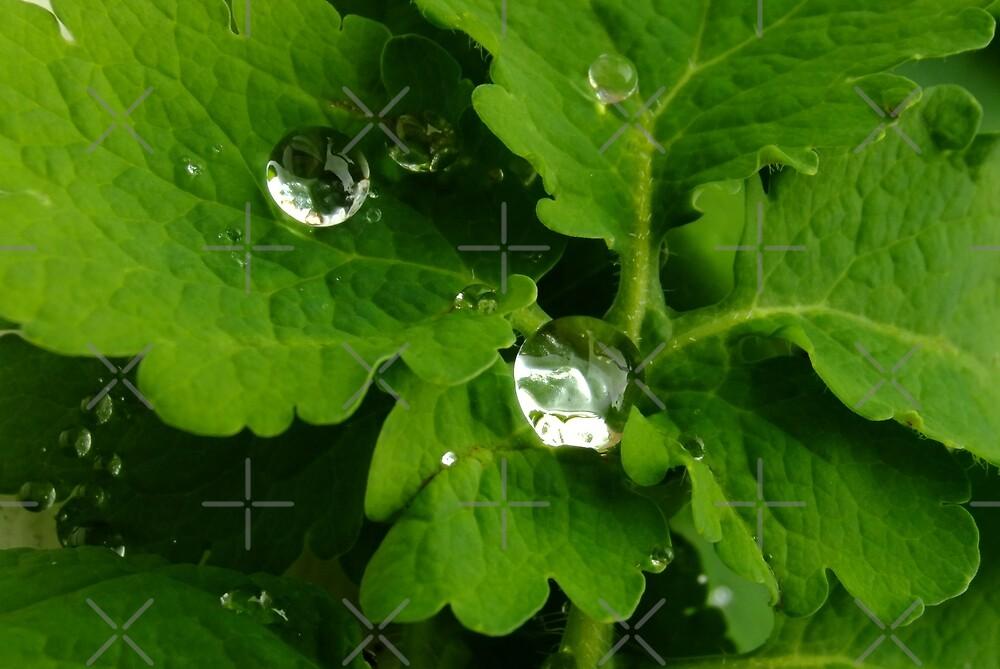 Water diamonds by Themis