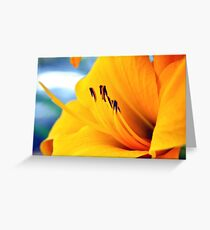The golden of orange Greeting Card