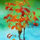 My First Autumn by Rene Crystal