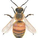 Honeybee by Theodora Gould